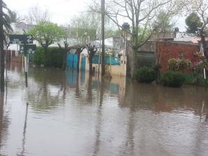 tigre inundados